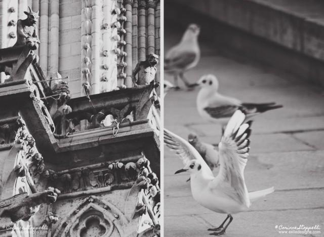 Gargouilles et mouettes à Paris
