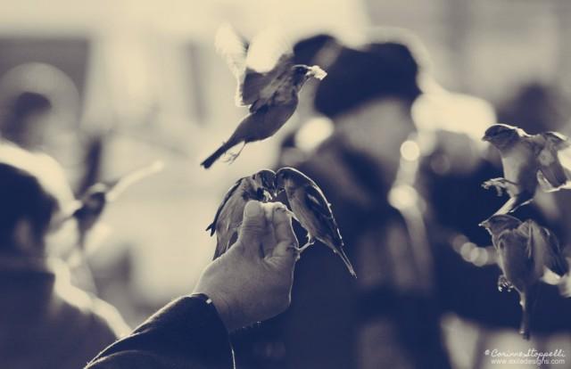 Nourrir les oiseaux à Paris