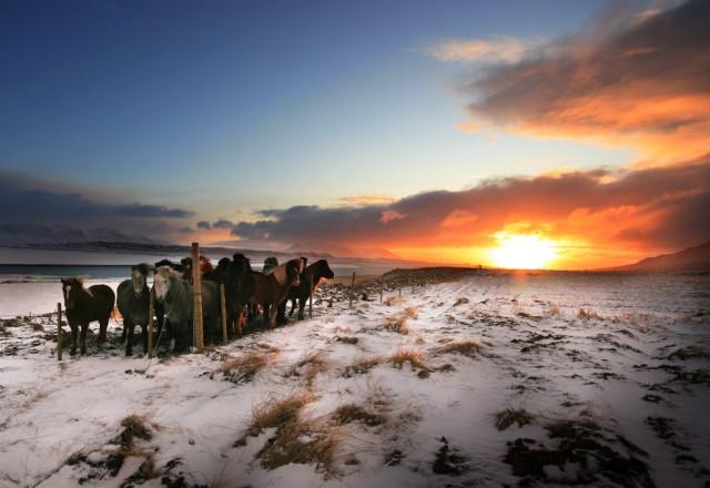 Osàr, Islande