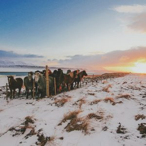 Road trip en Islande en hiver: Osàr et Hvitserkur