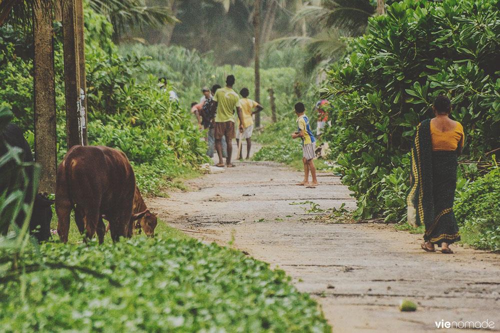 Partie de cricket des rues au Sri Lanka