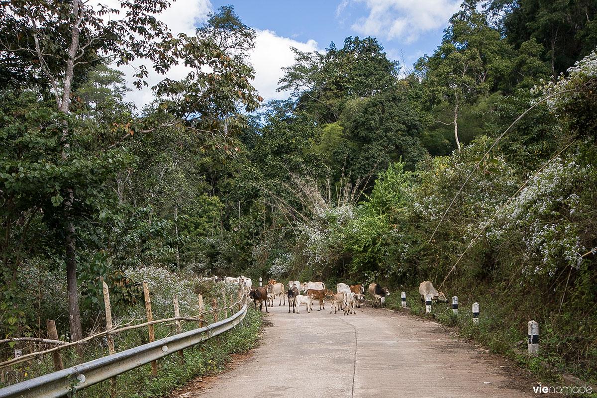 Road trip en Thaïlande: Mae Lana et Jabo
