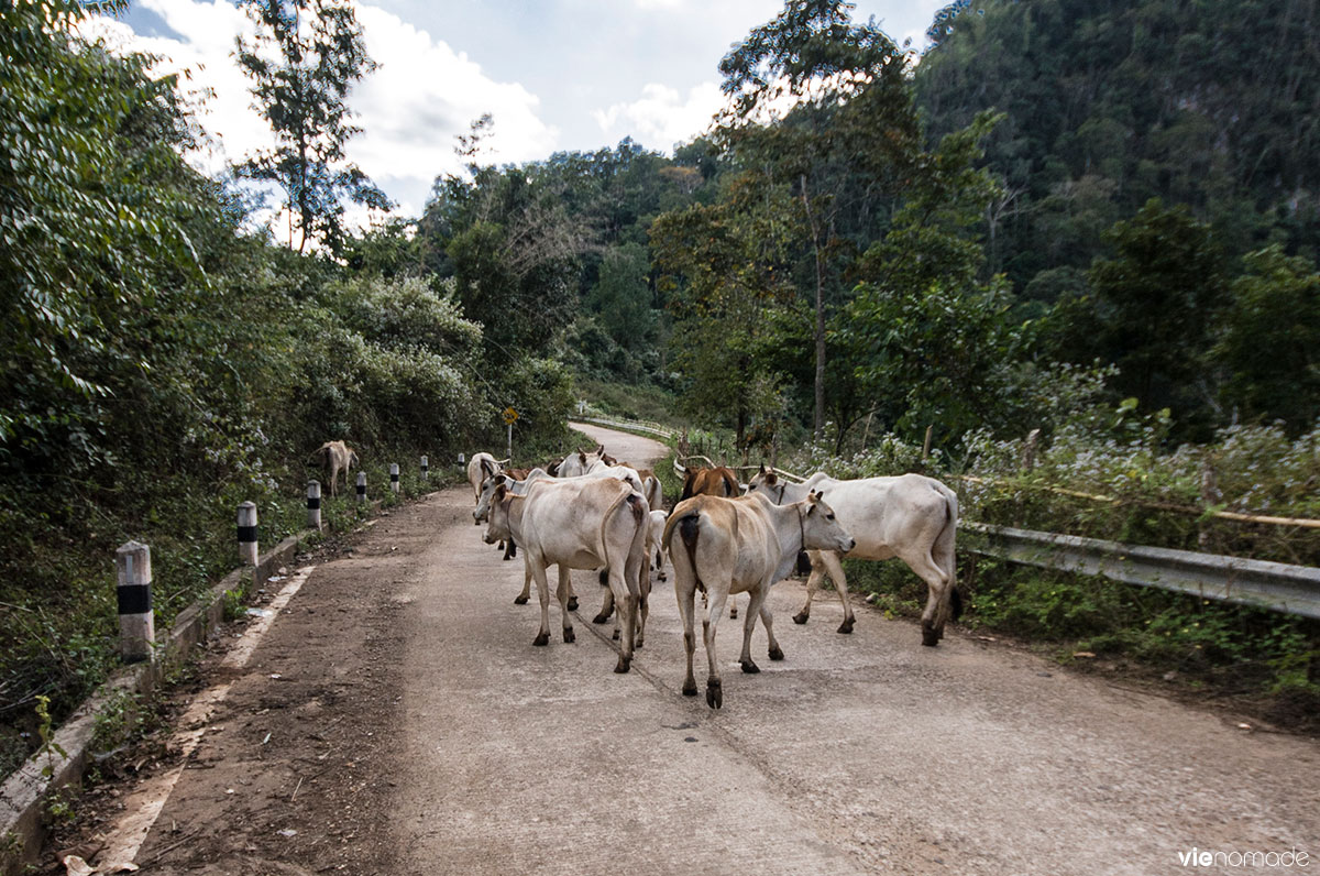 Road trip en scooter en Thaïlande