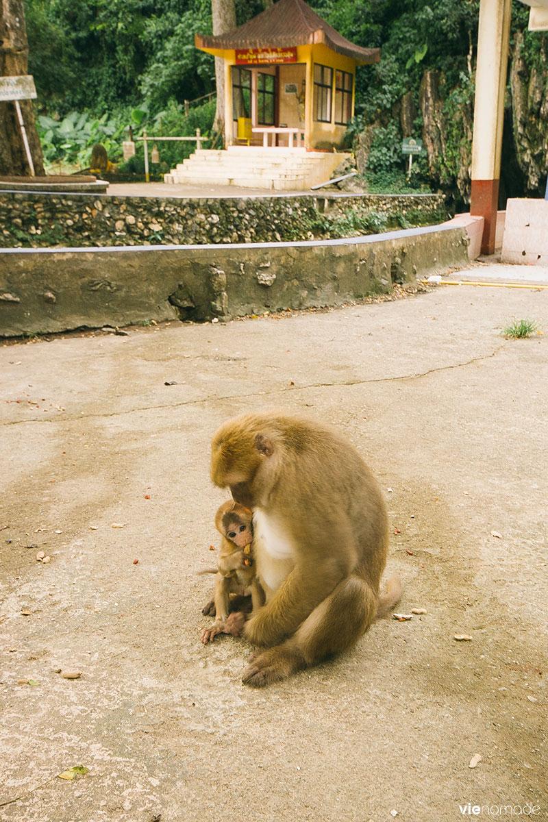 Temple des singes à Chiang Rai