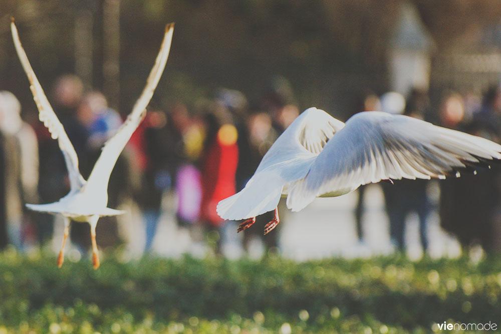L'oiseau sans pattes