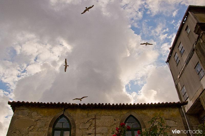Les albatros de Porto