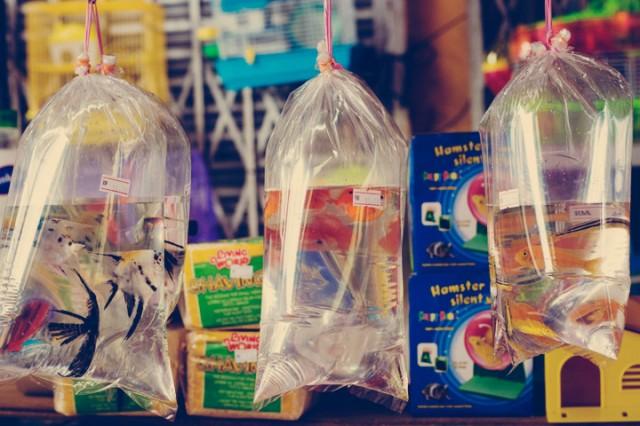 Au marché de Kuching