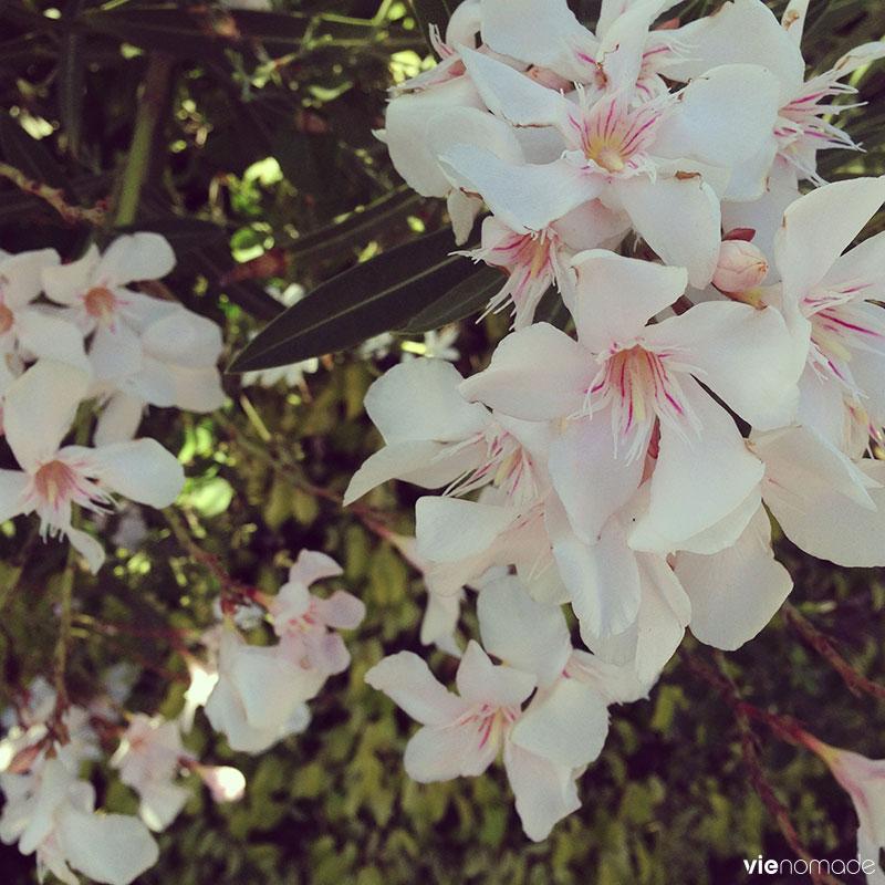 Belles fleurs aux îles canaries