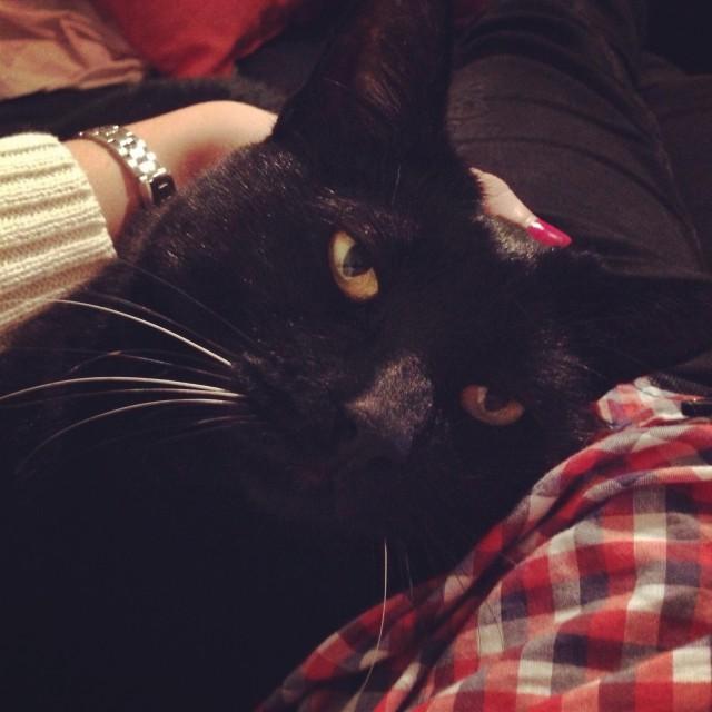Cat-sitting Pablito