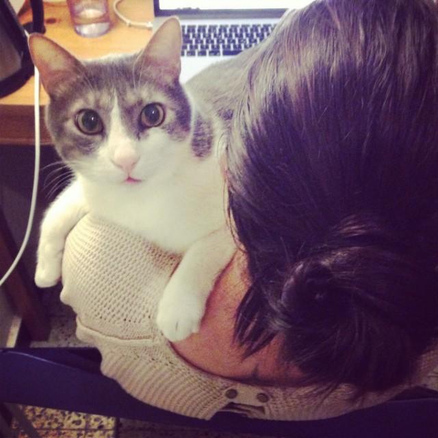 Cat-sitting Tounsi