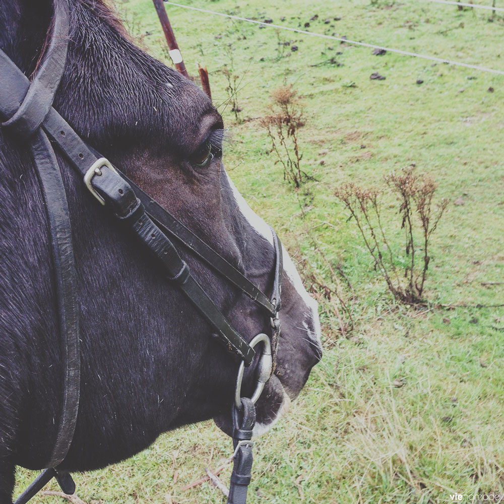 Balade à cheval dans les environs de Dublin