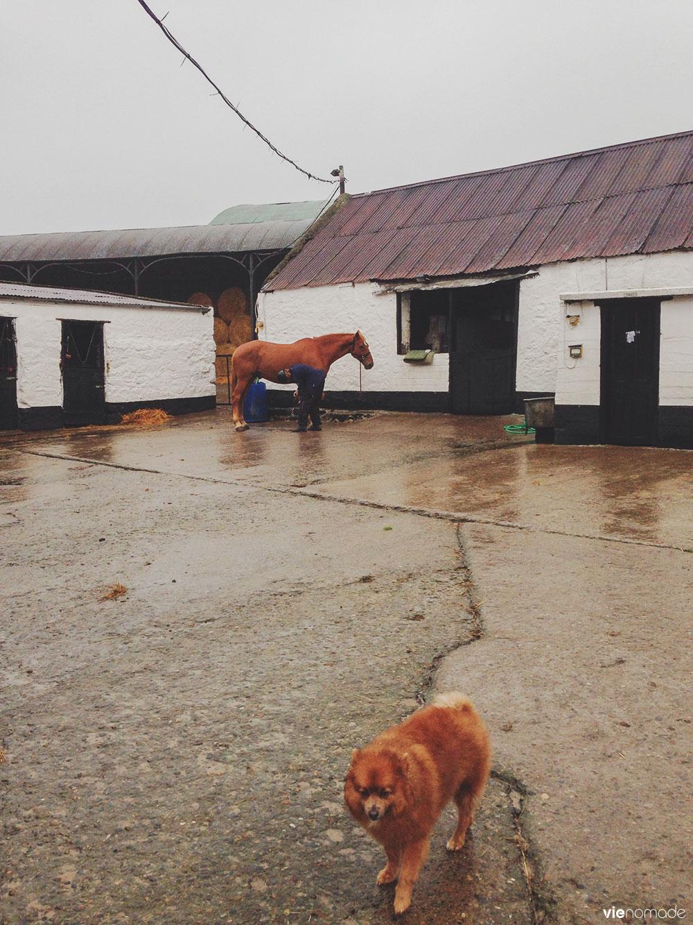 Balade à cheval dans le Wicklow en Irlande