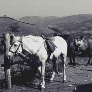Une chute de cheval, un coccyx fissuré