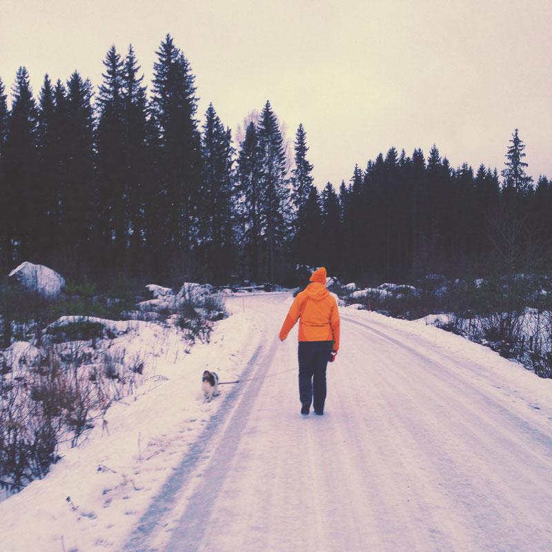 Dans les forêts de Finlande