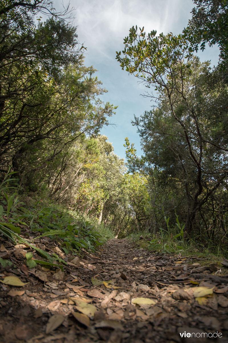 Randonnée en Corse: dans le maquis