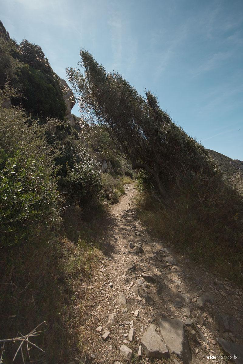 Sentier des Douaniers, maquis corse