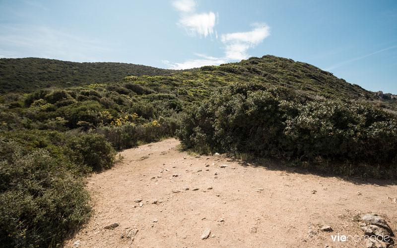 Le maquis du Sentier des Douaniers