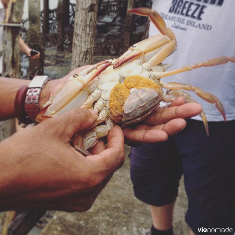 Banque de crabes à Bang Pat, Thaïlande