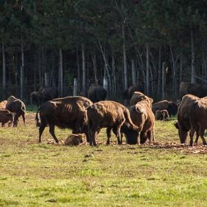 Terre des Bisons, Lanaudière