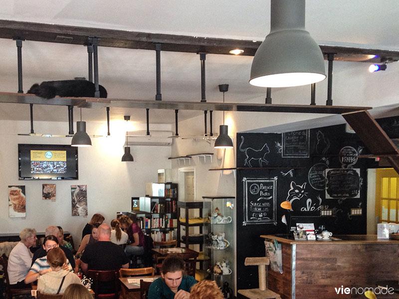 Café Chat l'heureux, Montréal