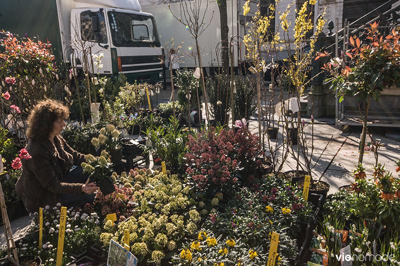Marché aux fleurs, Gand