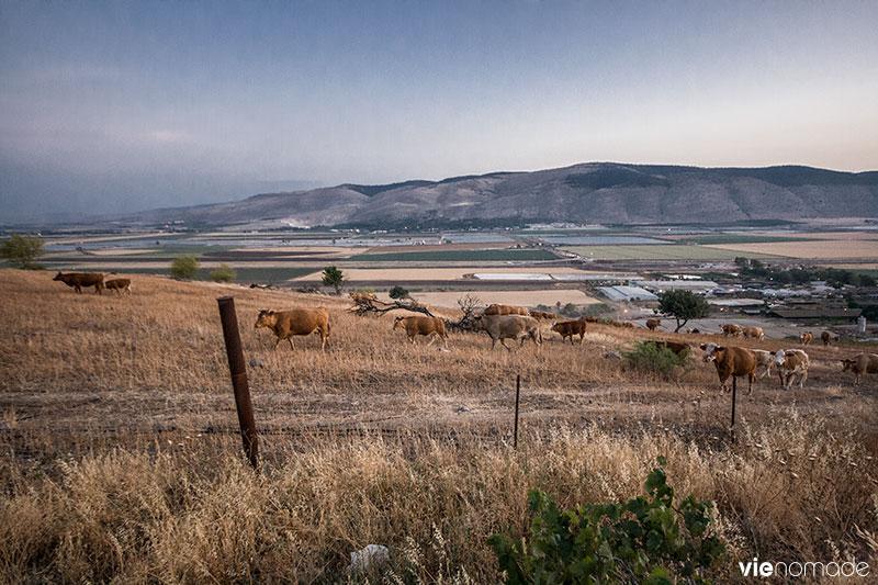 Kibboutz Beit HaShita