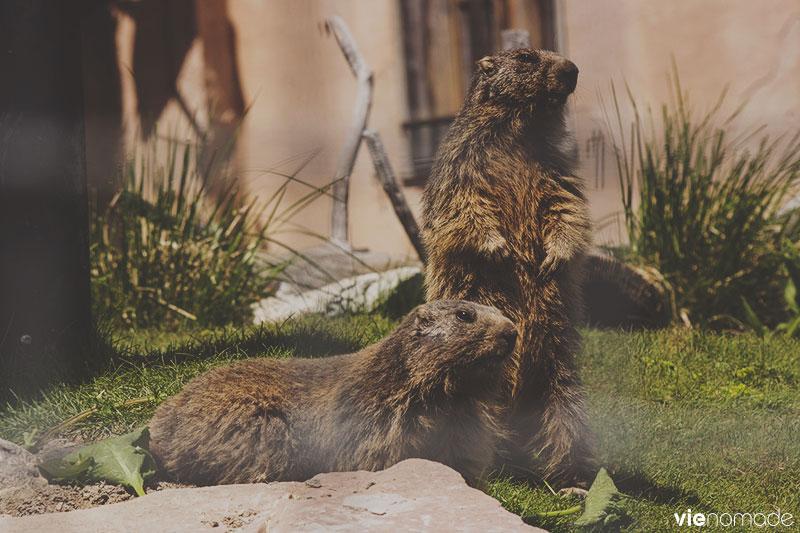 Marmottes Paradis, Rochers de Naye