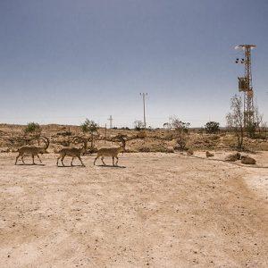 Randonnée dans le désert du Néguev, à Mitzpe Ramon