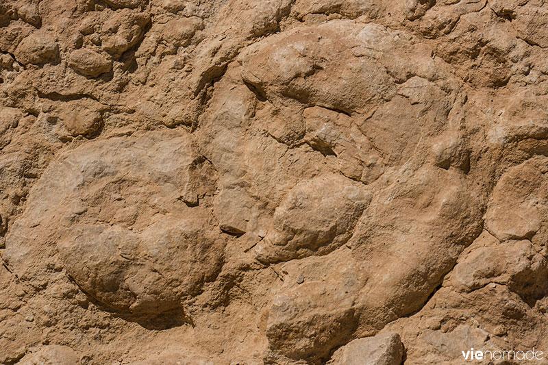 Mur d'ammonites dans le Néguev, Israël
