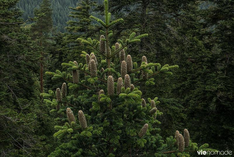 Baumwipfelpfad, découvrir la vie sur la canopée