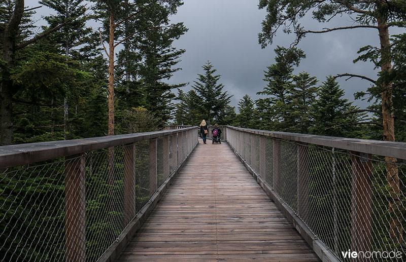 Baumwipfelpfad, le sentier sur la canopée, à Bad Wildbad