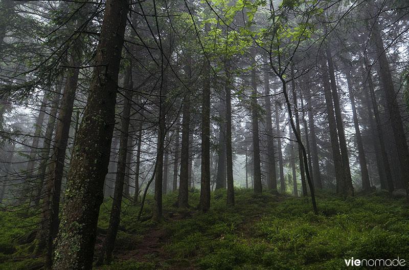 Balade en Forêt-Noire, au Mummelsee