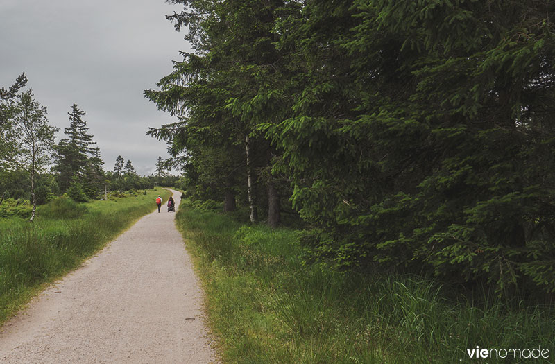 Randonnée accessible au Ruhestein, Forêt-Noire