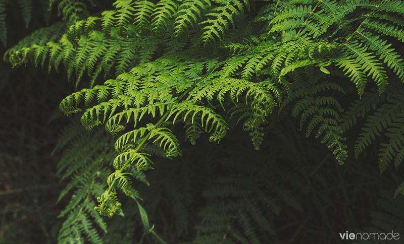 Parc National de la Forêt-Noire