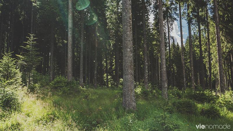 Balade autour du Schluchsee, Forêt-Noire