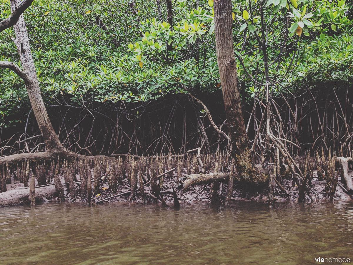 Kayak dans la mangrove à Phang Nga