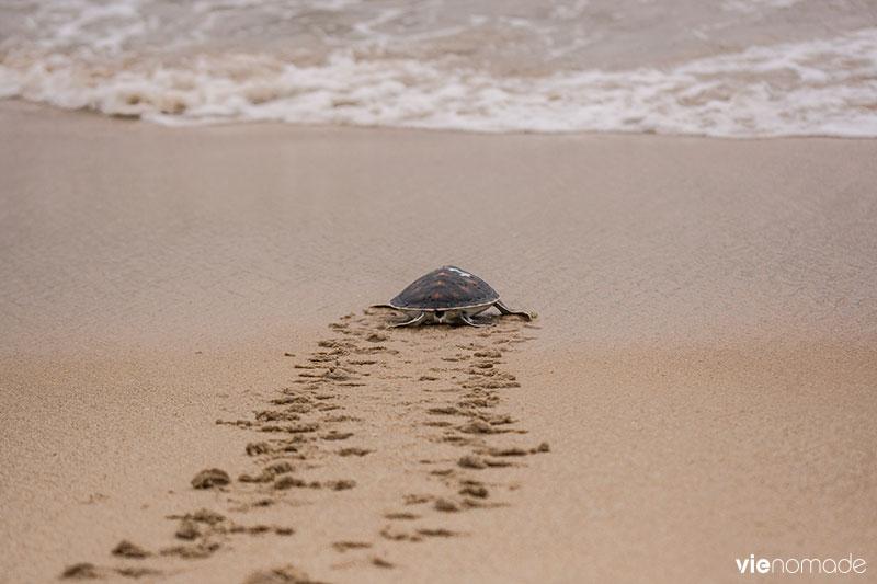 Relâcher les tortues marines à Phang Nga