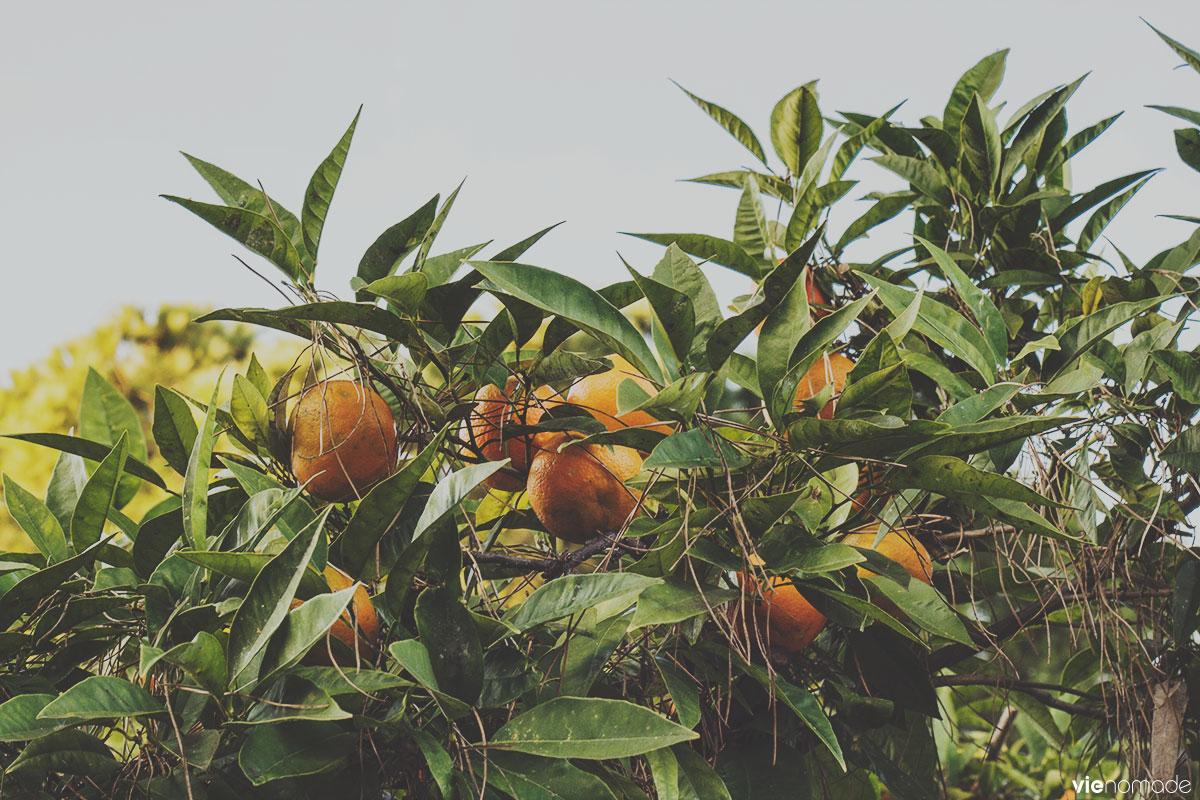 Le jardin des orangers sur la colline de l'Aventin