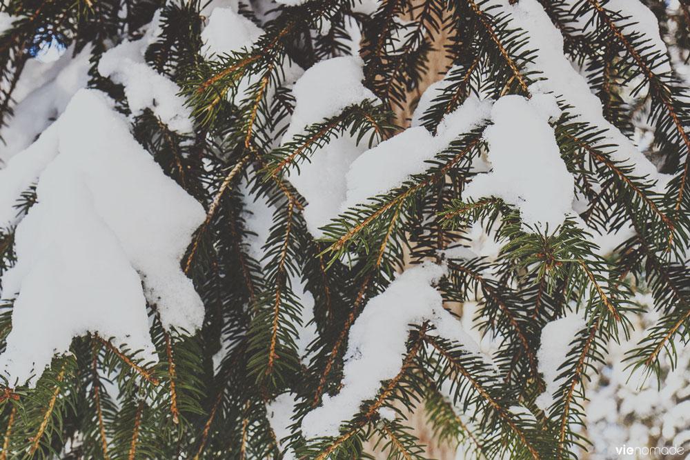 Randonnée dans la neige à Gryon
