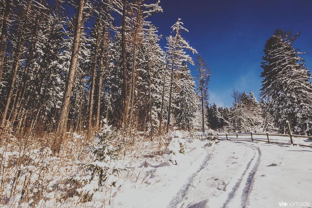 Randonnée dans la neige autour de Gryon, Vaud
