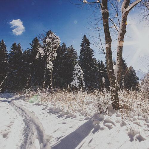 Une randonnée dans la neige, à Gryon, Suisse