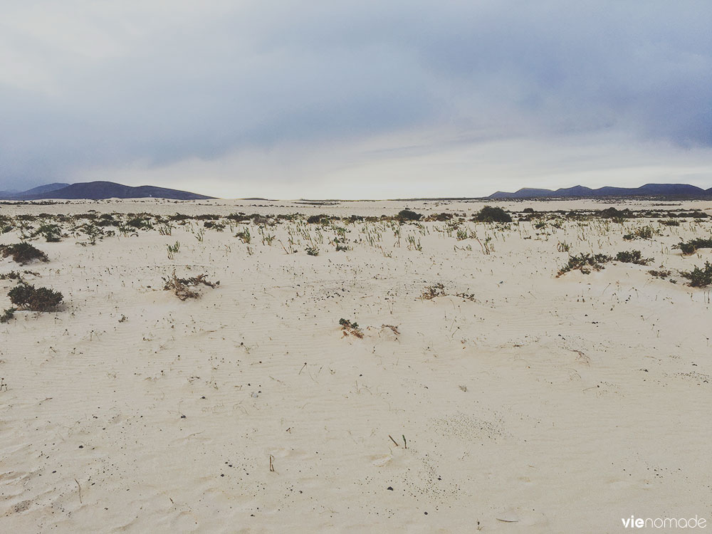Dune de Corralejo