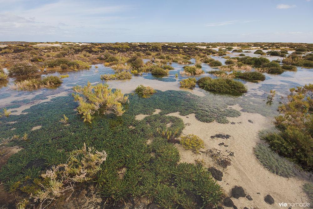 Lagunitas de l'Islote de Lobos, Fuerteventura