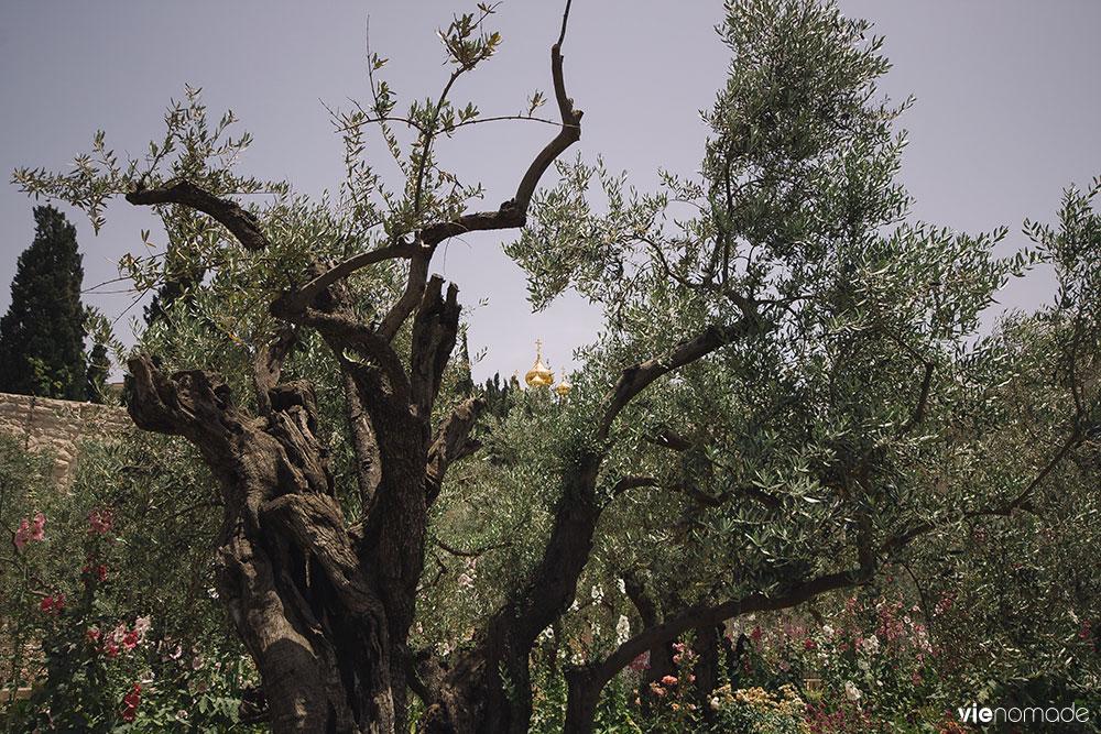 Jardins de Gethsémani à Jérusalem