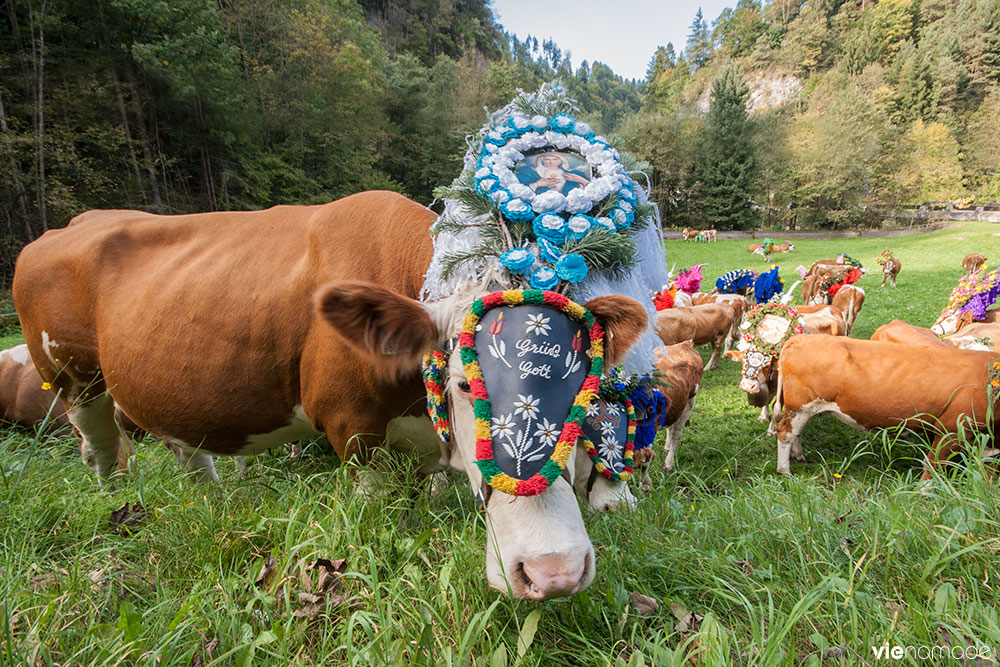 Vaches en fleurs à Kufstein, Tyrol