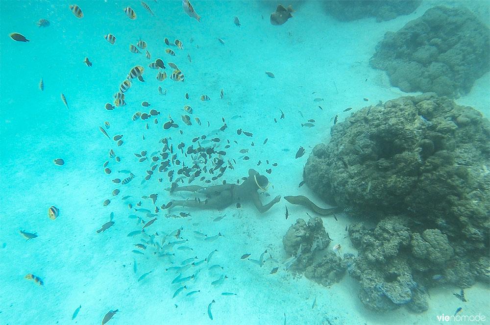 Snorkeling avec les raies et les requins à Bora Bora