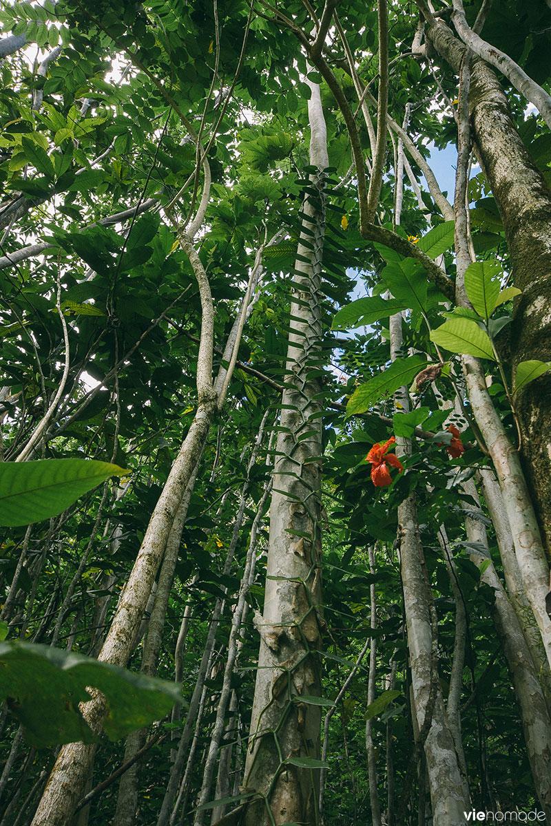 Randonner à Tahiti: Fautaua ou Fachoda