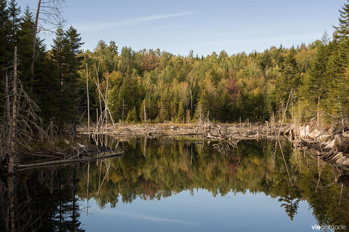 Observation du castor au Québec