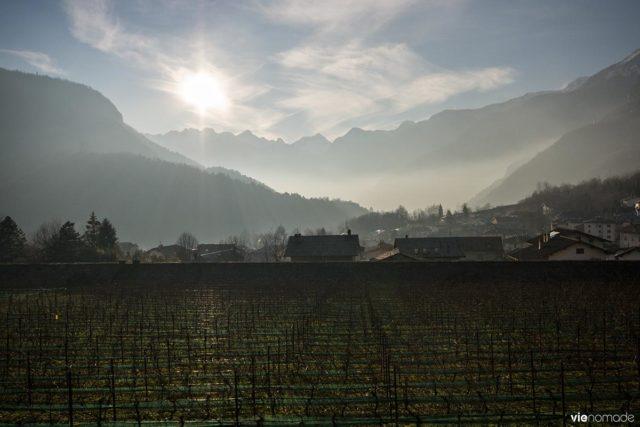 Vignoble du Palazzo Vertemate Franchi à Chiavenna, avec le vin Anfora