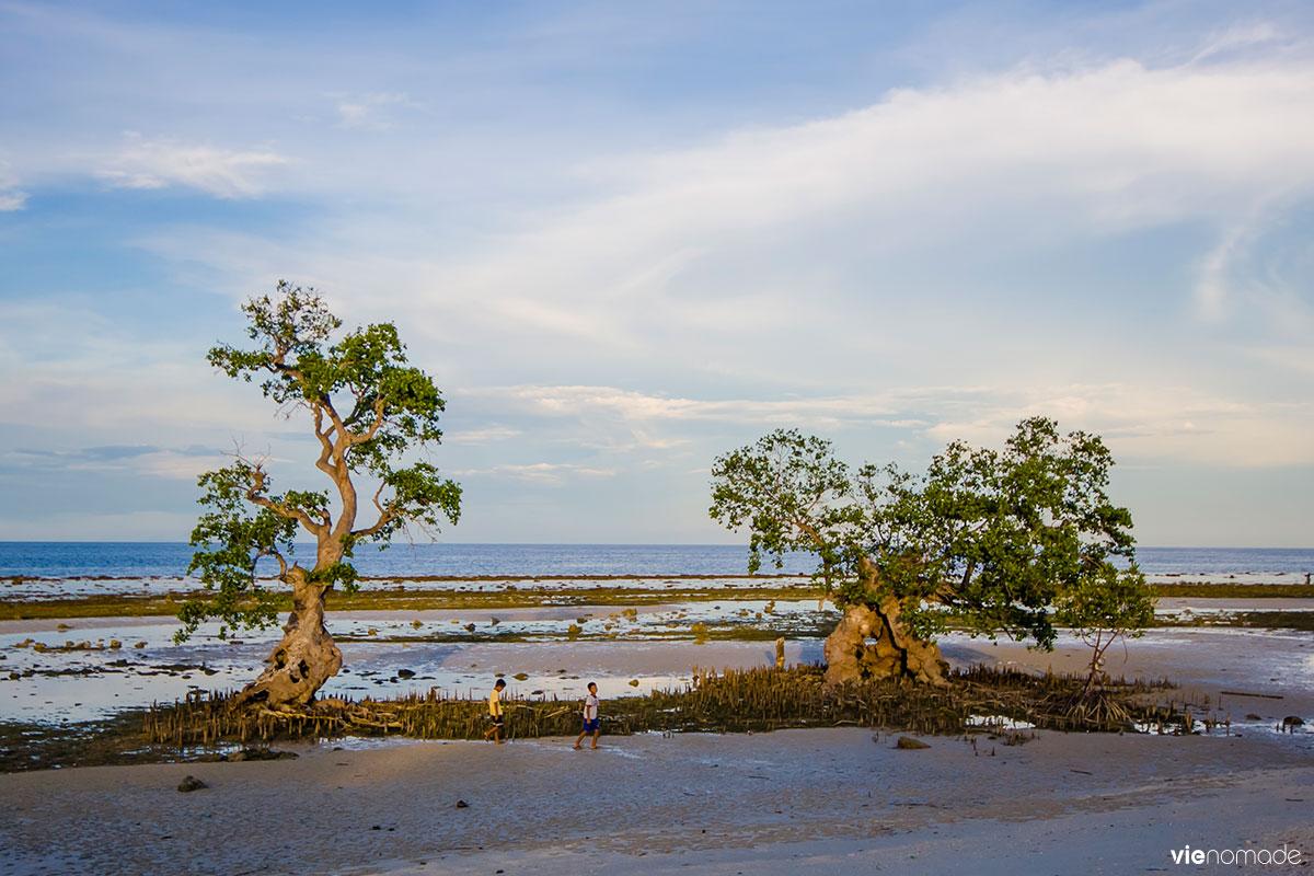 La mangrove à Siquijor
